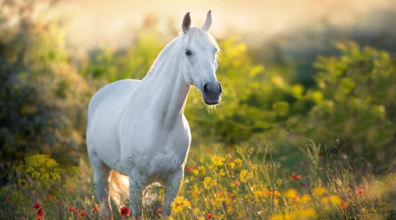 Les plantes au service du bien être du cheval