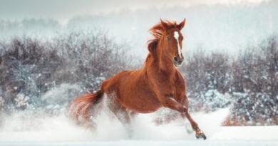 Quel complément pour mon cheval en hiver
