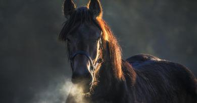 Respiration d'un cheval en hiver